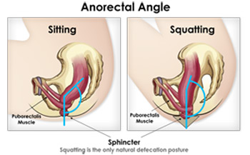 Anorectal Angle